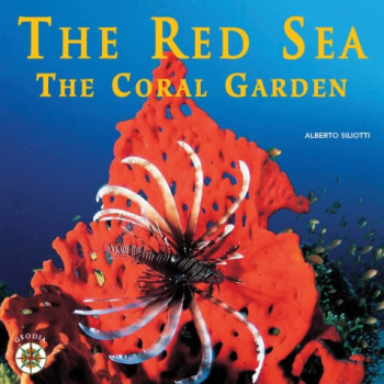 The Red Sea The Coral Garden